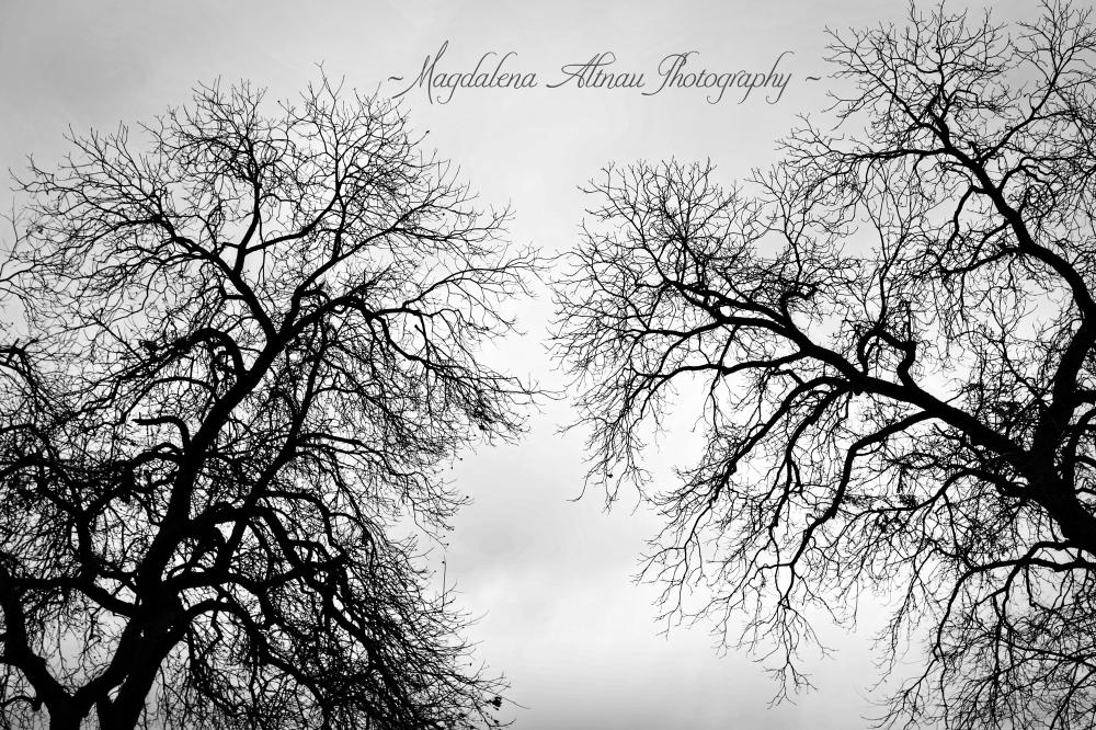 Arboreal Breath I