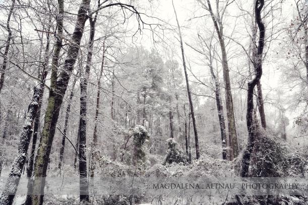 Fairy Tale Snow 2015  :: 2 :: Magdalena Altnau