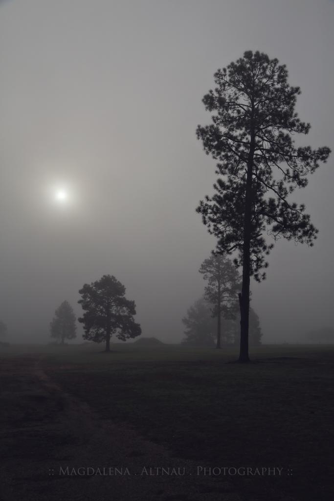 Fog & The Rising Sun I :: Magdalena Altnau Photography :: The BlueStocking At Home :: 2015