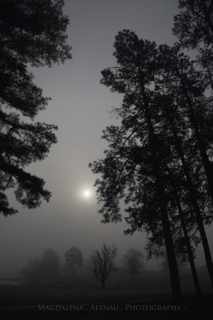 Fog & The Rising Sun II :: Magdalena Altnau Photography :: The BlueStocking At Home :: 2015